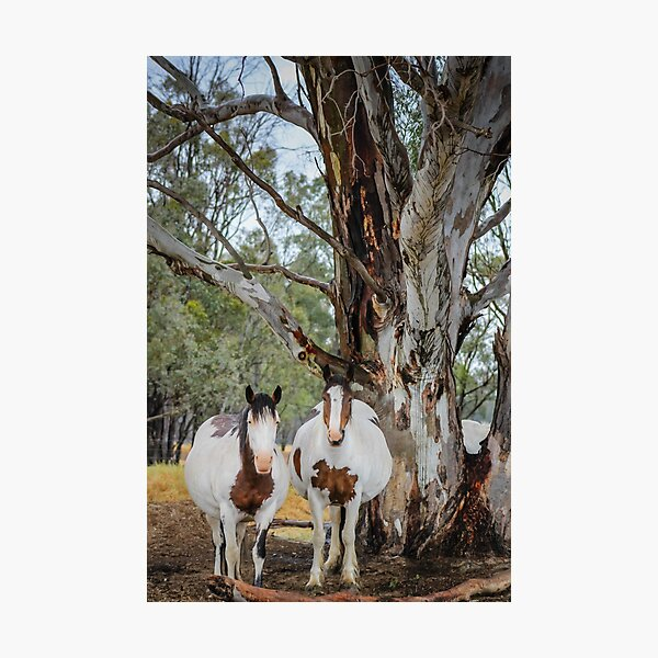 Mares in waiting  Photographic Print