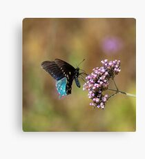 Lepidoptera Canvas Print