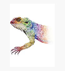 bearded dragon rainbow Mix Photographic Print