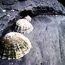Shells (: by Jess Collett