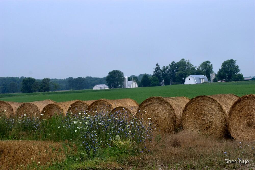 Down on the Farm by Sheri Nye