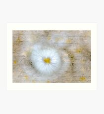 Love Letter on Abstract Daisy Art Print