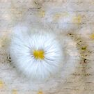 Love Letter on Abstract Daisy by Phototrinity