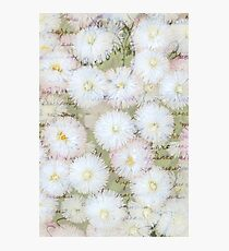 Love Letter on Daisies Photographic Print