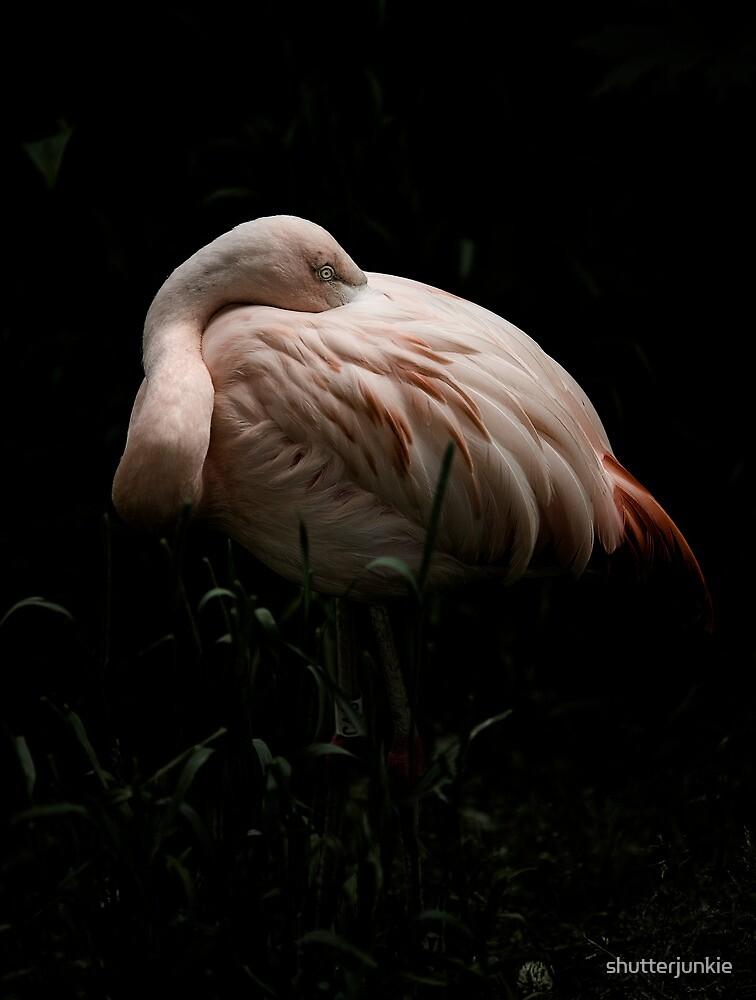 The Flamingo by shutterjunkie