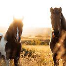 Zwei Pferde in Island von marinaweishaupt