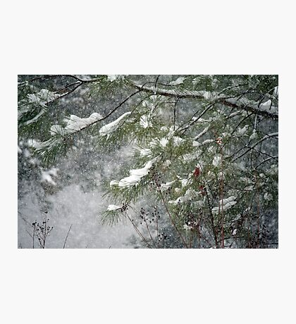 Wishing for Winter Photographic Print