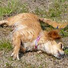 Dixon,Drying Of After Her Swim by MaeBelle