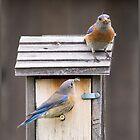 «Pájaros azules tendiendo a sus bebés» de CarolM