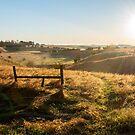 Spring Sun by Troy Stapek
