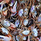 Crabby Crabs by Colleen Rohrbaugh