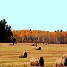 Pastoral Harvest by Larry Trupp