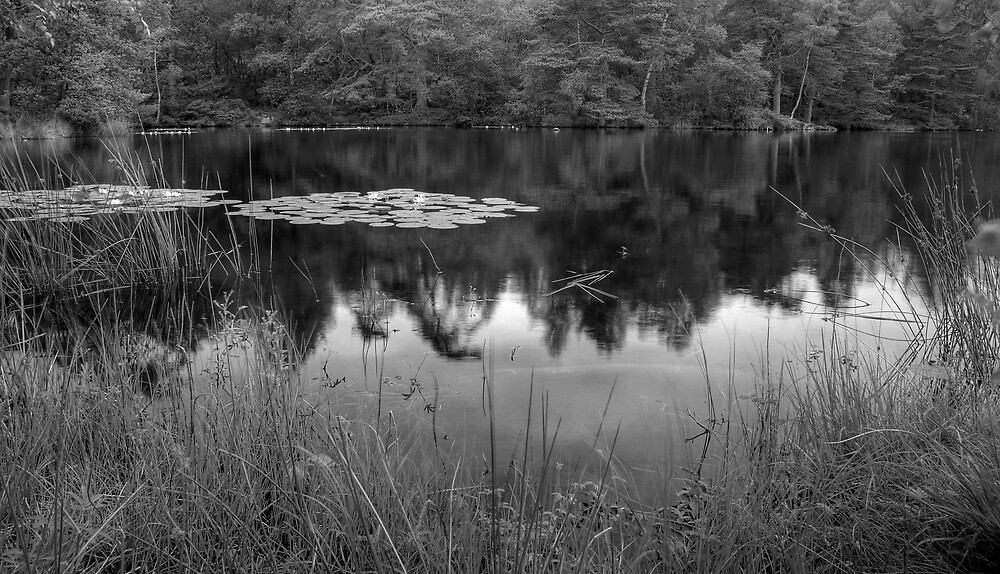 The Lilypond by EvilTwin