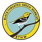 Black-throated Green Warbler by JadaFitch