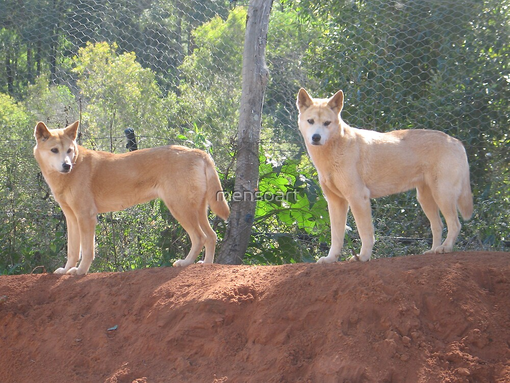 Dingoes by mensoart
