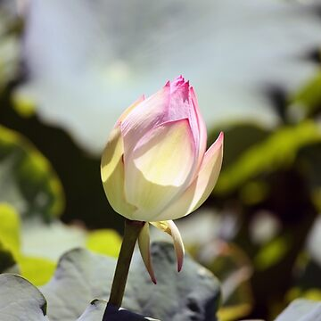 Pretty in Pink by martynbaker52