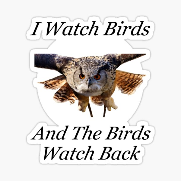 Funny Bird Watching Design With Flying Owl Sticker