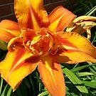 Backyard flower 2 by littlestmonkey