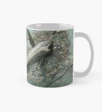 Cartorhynchus lenticarpus Classic Mug