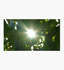 Sun flared leaves in Wakarusa Photographic Print