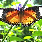Burst of Colors -- Key West Butterfly by John Carpenter