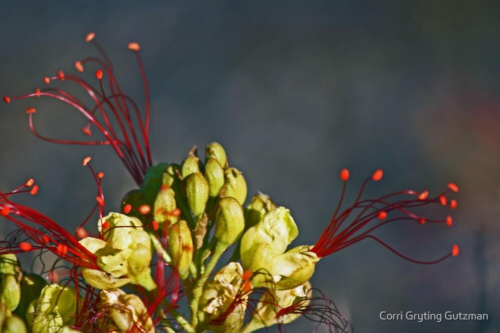 Mexican Bird of Paradise by Corri Gryting Gutzman