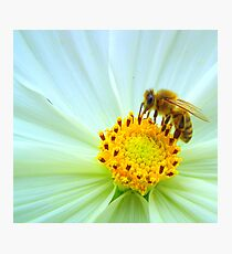 Nectar collector Photographic Print