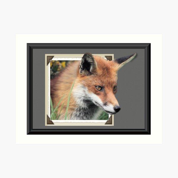 Framed Fox Art Print