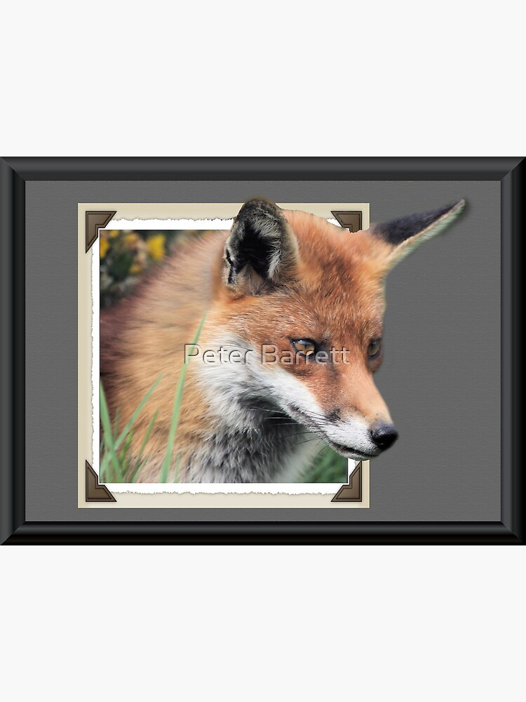 Framed Fox by hartrockets