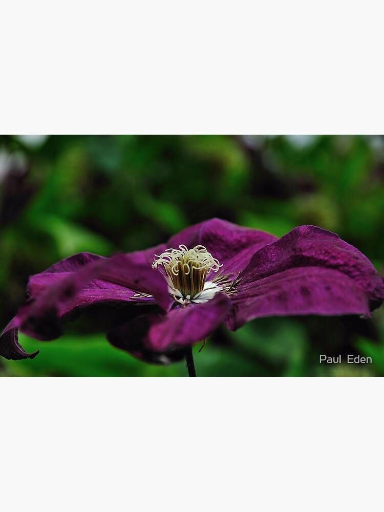 Purple Flower by pauleden