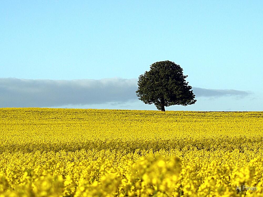 Fife's Golden Fields Of Rapeseed. by Aj Finan