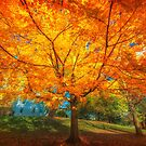 Shaded by Autumn fire by Owed To Nature