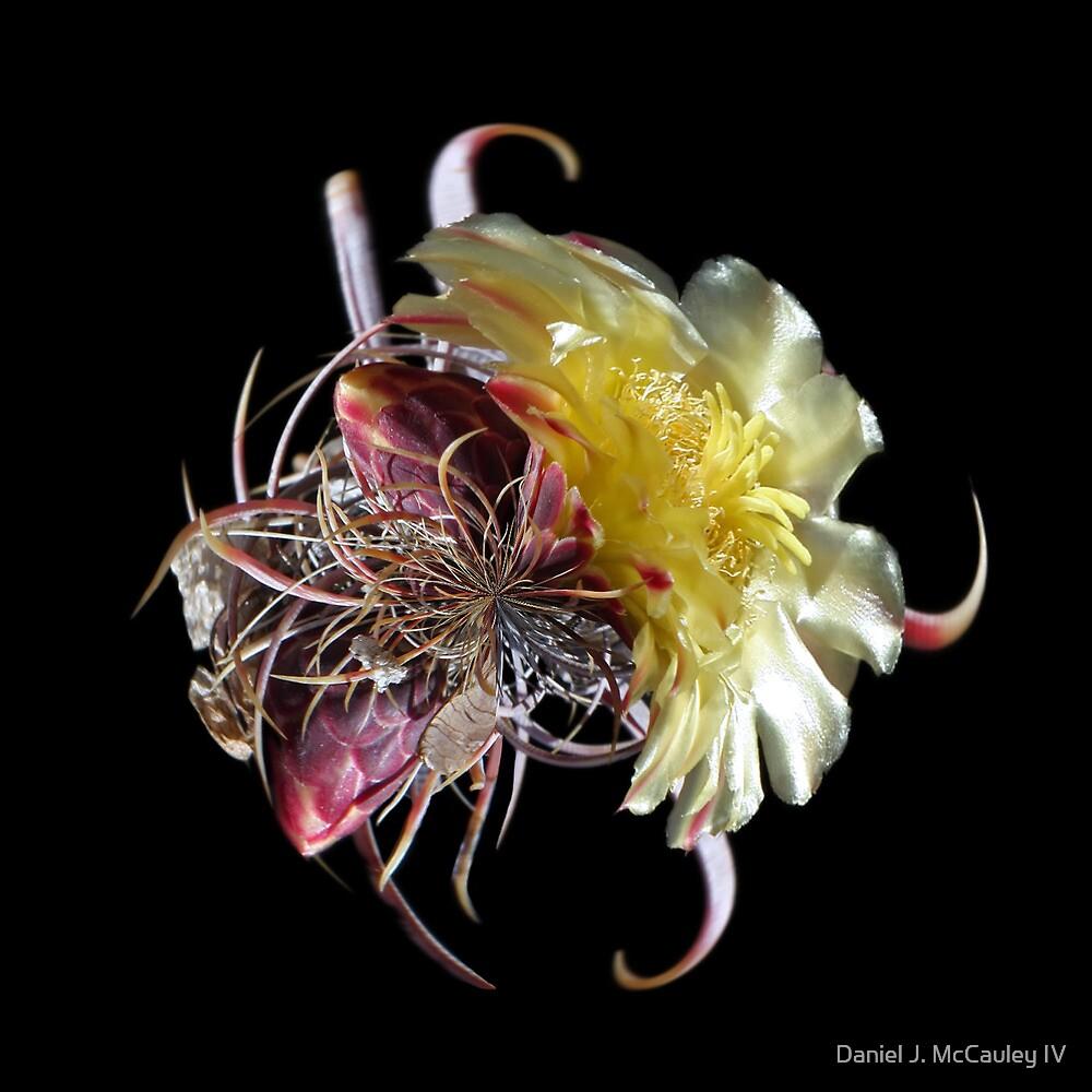 Cactus Flower LP by Daniel J. McCauley IV