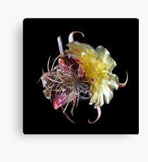 Cactus Flower LP Canvas Print