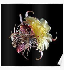 Cactus Flower LP Poster