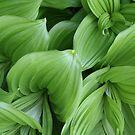 Green Beauty by pallyduck