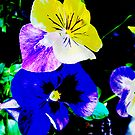 Pansies by Mary Tomaselli