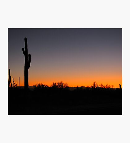 Saguaro Sunset Photographic Print