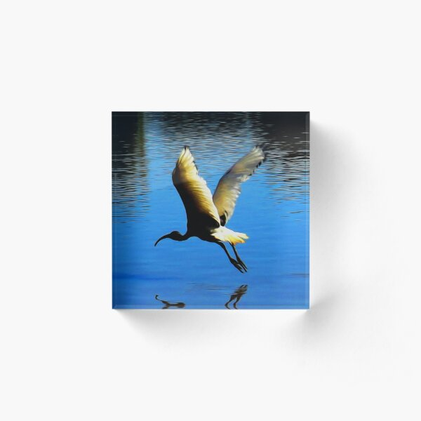 White Ibis Acrylic Block