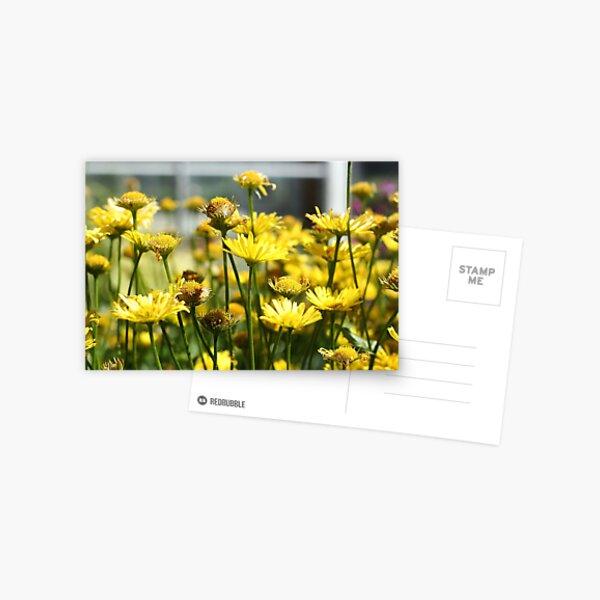 Paint Me Yellow Postcard