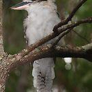 «Jacky Kookaburras australianos.» de Virginia McGowan