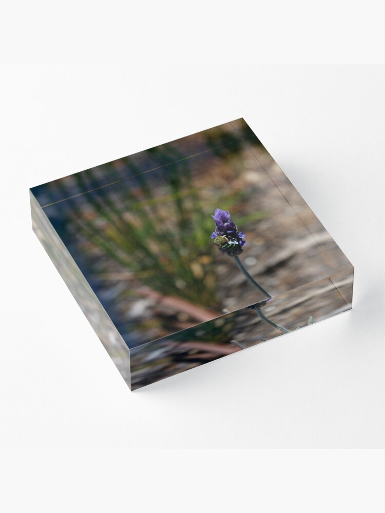Alternate view of Blue banded bee Acrylic Block