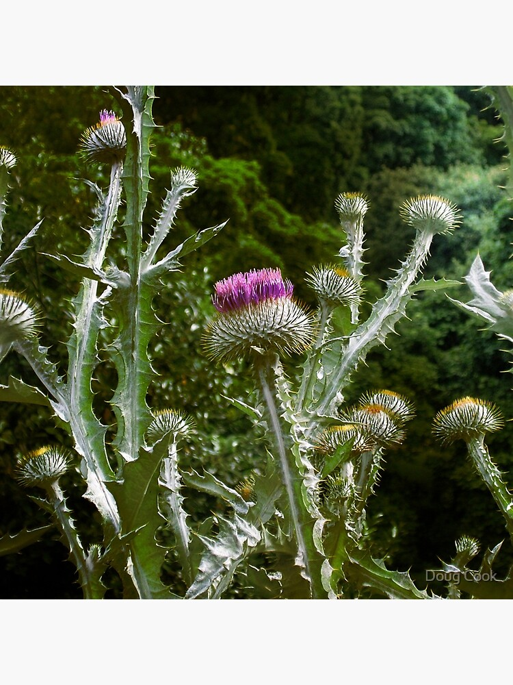 Thistles by DougCook