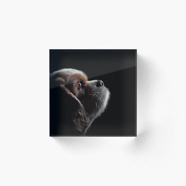 Pet Profile Acrylic Block