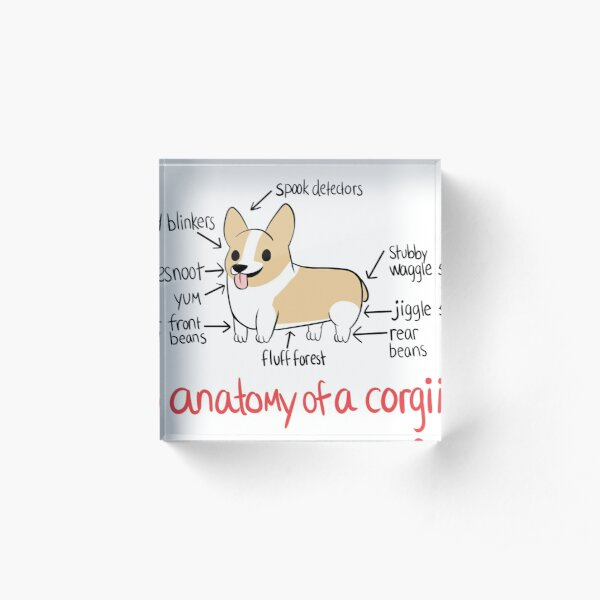 Anatomy of a Corgi Acrylic Block
