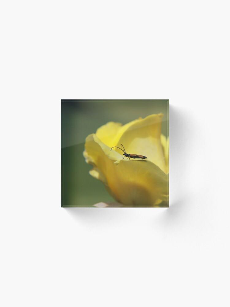 Alternate view of Milkweed bug on yellow rose Acrylic Block