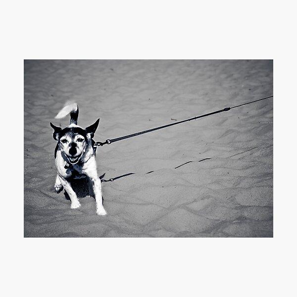 ...walkies... Photographic Print