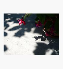 Red Shadow Photographic Print