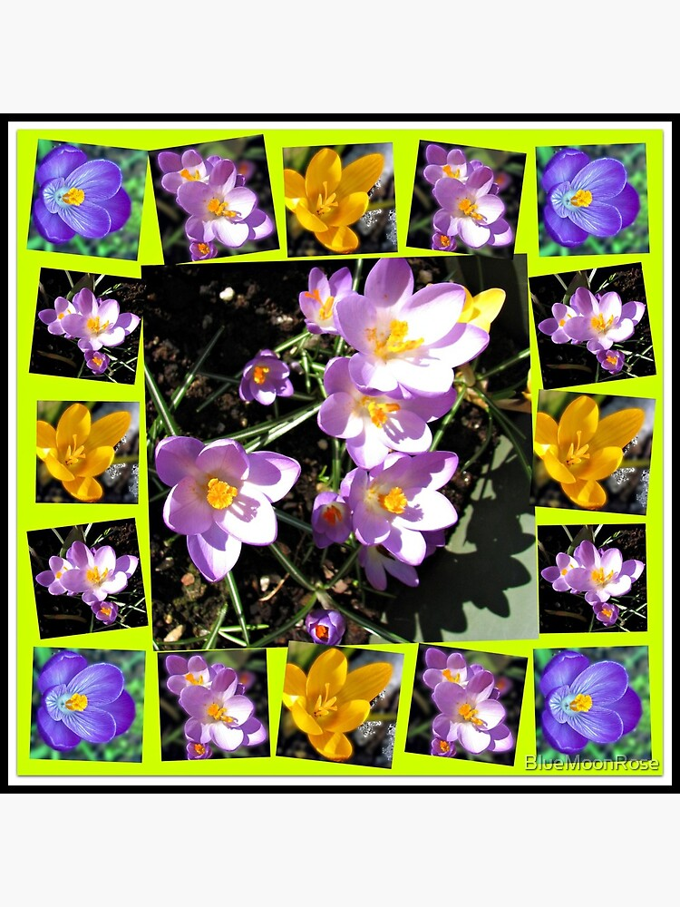 Cute Crocuses Collage von BlueMoonRose