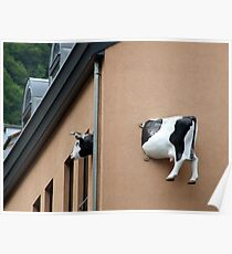 Cow House Poster
